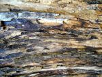 Stock Texture - decayed wood II by rockgem