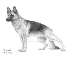 German Shepherd by BadMasterWolf