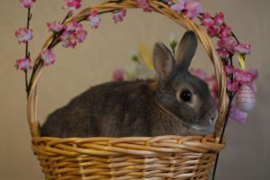 Snezhi in the Easter basket by daemoniaphotography
