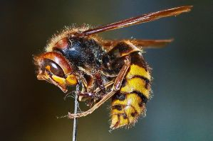 Wasp by Acidmittens