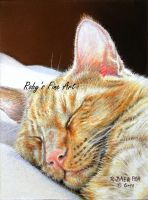 """Ginger Nap"" - Realism by robybaer"