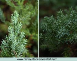 Plant- pack 079- STOCK by Rainny-Stock