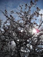 sun and ice and tree oh my by durkad