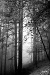 La foret by rdalpes