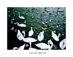 Can you see me by kalaja