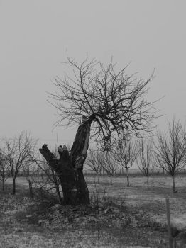 Tree_02 by Chennyho-Stock
