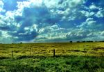 Blue Sky and Yellow Field by TheGerm84