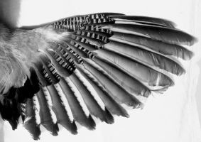 Grey Wing by KasStock