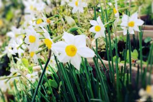 Narcissus.2 by doredore