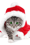 Santa Cat xD by xXCynthiaSerenaXx