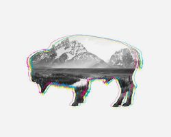 Bison by JoshCloud