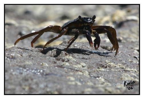 Feeling Crabby by oubaas