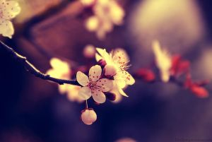 My beautiful Spring by *Samantha-meglioli