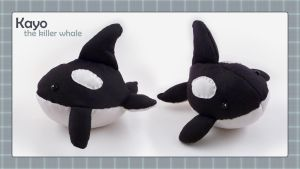 Kayo the Killer Whale by bytesizetreasure