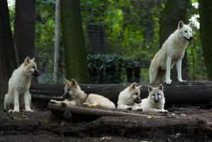 A new pack is forming... by charliechappy
