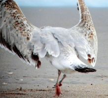 Dance of the Gulls by flowerhippie22