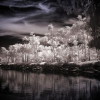 Palm Trees - infrared by MichiLauke