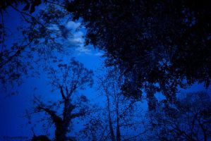 Blue Night by Escara40