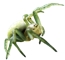 free cutout spider png on transparent background by wonderlandstockX