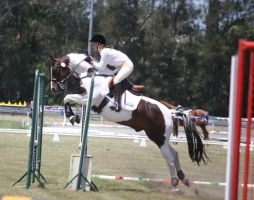 STOCK Showjumping 418 by aussiegal7