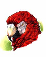 scarlet macaw by EatToast
