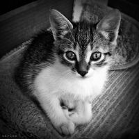 Baby Kitty II by MarinaCoric