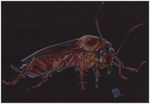 Day 113 The Cockroach by jetdog-art