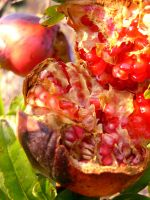 Juicy Pomegranate Fruit by MiDulceLocura
