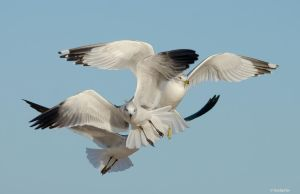 Gull Explosion by TerribleTer