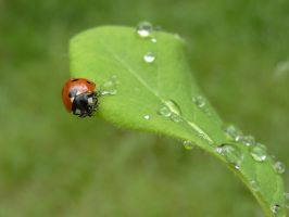 Coccinnelle 16 by eco6org