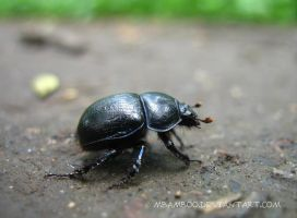 beetle by mbamboo