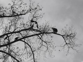 Crows hate... by michaeleen