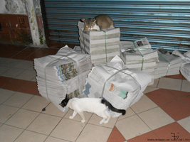 Newspaper cat and her kitten by K4nK4n