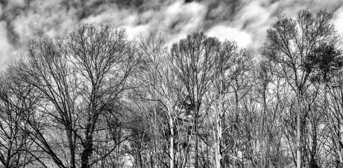 B and W-WinterTrees by KingFranco