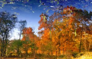 Autumn reflections by russinov