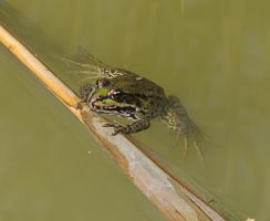 Frog 9459 by filmwaster