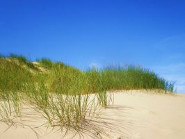 Dunes in the Netherlands by jeroenpaint