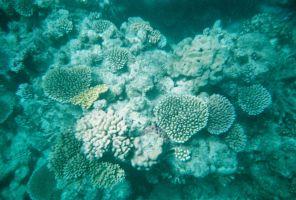 Great Barrier Reef by Cheerychic