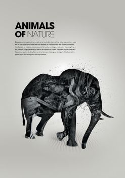 Animals of nature - Elephant by karmagraphics