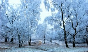More hoarfrost enchantment by jchanders