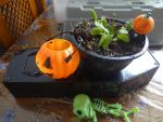 carnivorous plant ready to ask for trick or treat by jaycebrasil