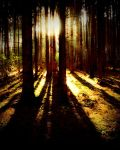 sunrays in the woods by Mittelfranke