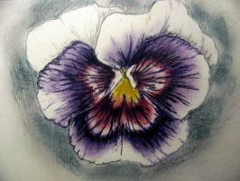 Purple Pansy by chrisravensar