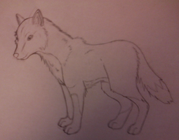 Wolf by TayMay135