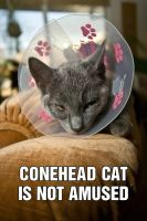 conehead cat by JasonKaiser