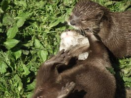 Two Otters by immortal-spud-thief
