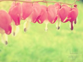 Summerhearts by Photografisk