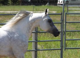 Sparky 026 by Notorious-Stock