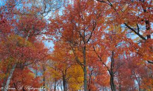 Autumn Canopy by Brian-B-Photography