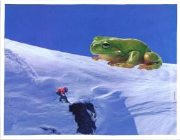 Frog, Snowboarder, and Gorilla by hitokirivader